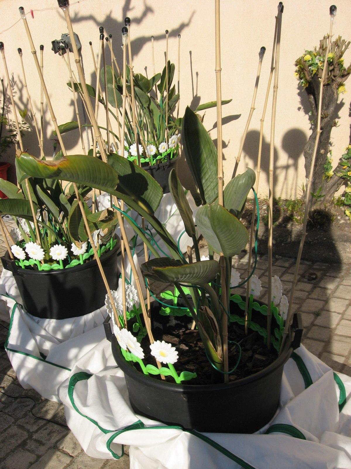 Houssiver des housse abri pour fleur et plantes